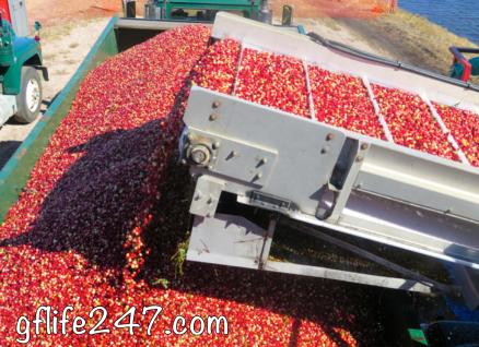 Cranberry Baked Apple (GF, V)